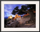 A Juniper Frames South Gateway Rock in Garden of the Gods  Colorado