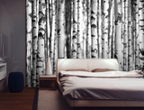 Silver Birch Forest Wall Mural