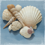 Shell Collection IV