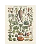 Legumes I Giclée par Adolphe Millot