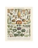 Legumes II