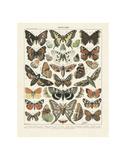Papillons 2 Reproduction d'art par Adolphe Millot