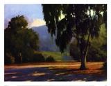 Eucalyptus Sunset