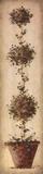 Tall Topiary I