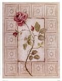 Rosa Antigua ll