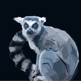 Ring Tailed Grey Lemur Creeping in Shadows on Dark Background