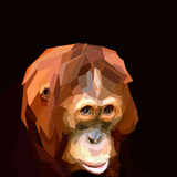 Sad Cute Orangutan Face on Dark Background