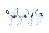 Watercolor Asian Crane Bird Set