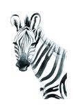 Watercolor Zebra Isolated on White Background Raster Illustration