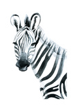Watercolor Zebra on White Background