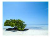 Florida Lonely Tree Reproduction d'art par Melanie Viola