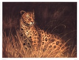 Spotted African Cat