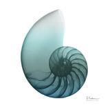 Water Snail 4 Reproduction d'art par Albert Koetsier