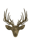 Aged Deer Mate