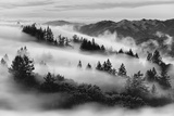 Dreamland  Black and White  Fog at Mount Tamalpais  Marin  Bay Area San Francisco