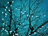 Tree at Night with Lights Papier Photo par Myan Soffia