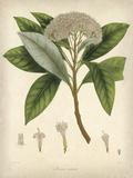 Vintage East Indian Plants V