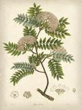Vintage East Indian Plants VI