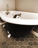 Kitty III