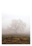 Oak Tree 29