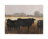Black Cows II