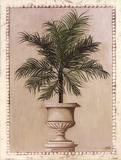 Palm Appeal II