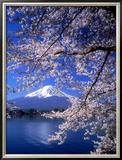 Cherry Blossoms and Mt Fuji