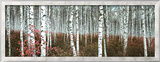 Silver Birch Forest  China