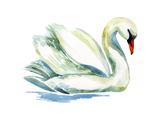 Watercolor Swan