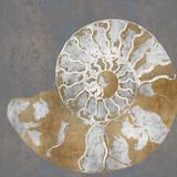 Nautilus II Giclée par Mark Chandon