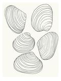 Coquillages Reproduction d'art par Jorey Hurley