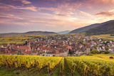 Sunset over the Vineyards Surrounding Riquewihr  Alsace  France