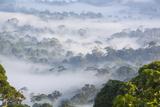 Mist  over Tropical Rainforest  Early Morning  Sabah  Borneo  Malaysia