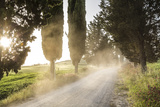 Cyclist on Dirt Road at Sunset  Tuscany  Italy