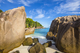 Palm Trees and Tropical Beach  La Digue  Seychelles