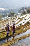 Young Women of the Hani Ethnic Minority Walking in the Rice Terraces  Yuanyang  Yunnan  China