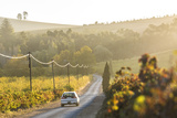 Car and Road Through Winelands and Vineyards  Nr Franschoek  Western Cape Province  South Africa
