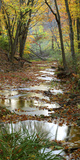 Autumn at Schuster Hollow in Grant County  Wisconsin  Usa