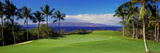 Palm Trees in a Golf Course  Wailea Emerald Course  Maui  Hawaii  Usa