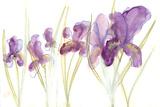 Spring Garden IV