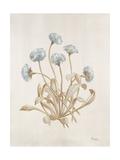 French Botanicals VII