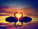 Two Swans Making a Heart Shape at Sunset Valentine's Day Romantic Concept