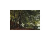 Forest Scene from Soro  Denmark