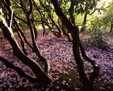 Floral Descent