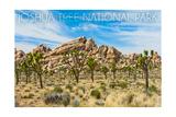 Joshua Tree National Park  California - Blue Sky and Rocks