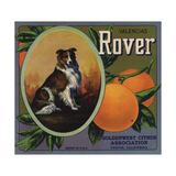 Rover Brand - Tustin  California - Citrus Crate Label