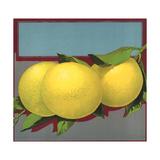 Grapefruit Branch - Citrus Crate Label