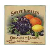 Sweet Violets Brand - Duarte  California - Citrus Crate Label