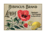 Hibiscus Brand - San Diego  California - Citrus Crate Label