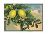 Lemon Tree Branch - Citrus Crate Label